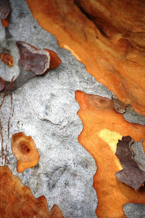 Corteza de árbol de goma fotos de archivo libres de regalías