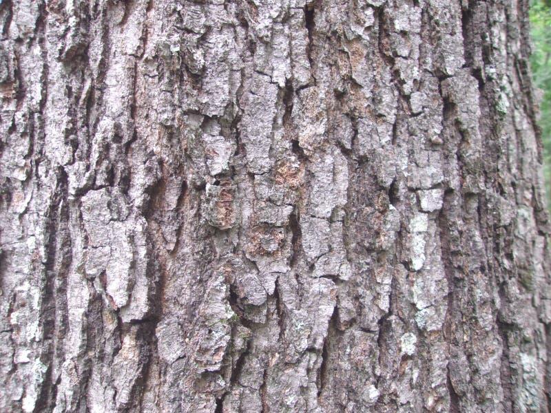 Corteza de árbol en el parque durante el 1 diurno imagen de archivo libre de regalías