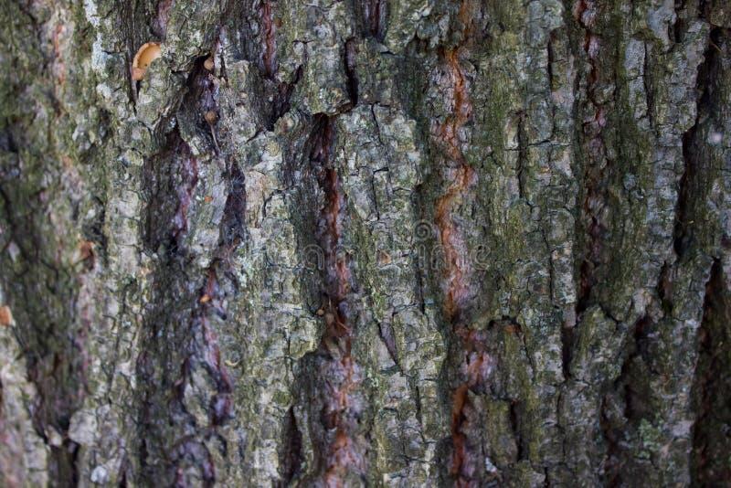 Corteza de árbol, fondo fotos de archivo