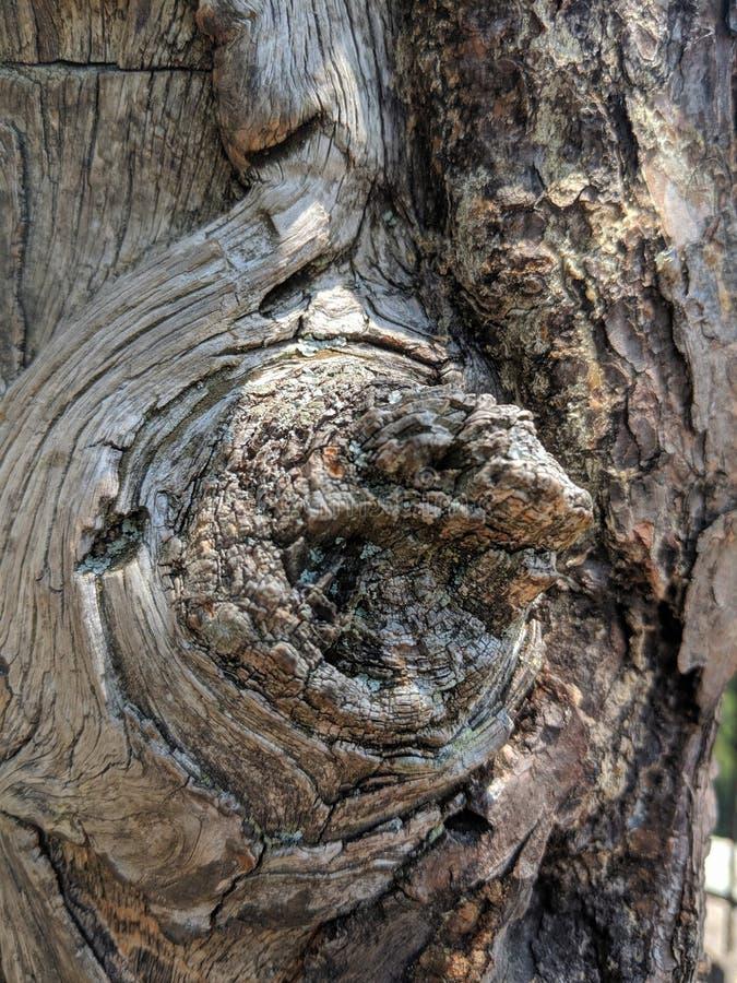 Corteza de árbol nudosa iluminada por el sol foto de archivo