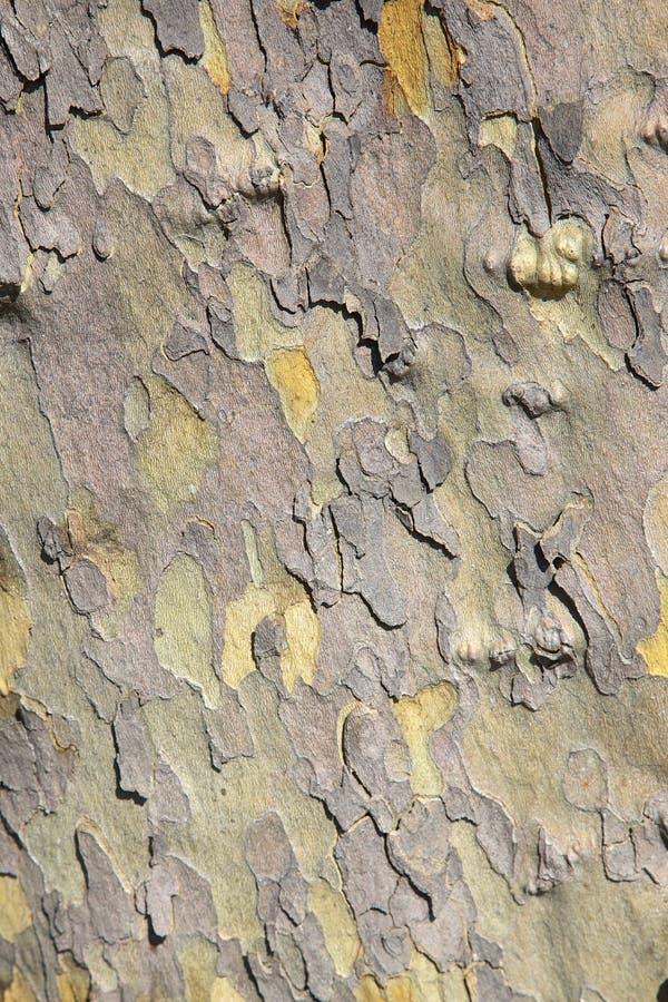 Corteza de árbol plano fotografía de archivo libre de regalías