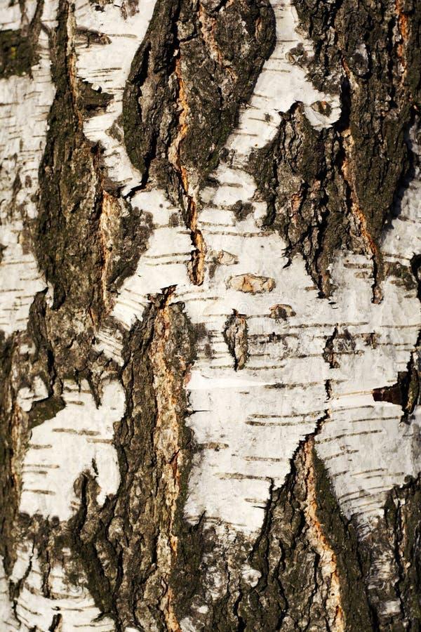 Corteza de árbol Textured fotos de archivo