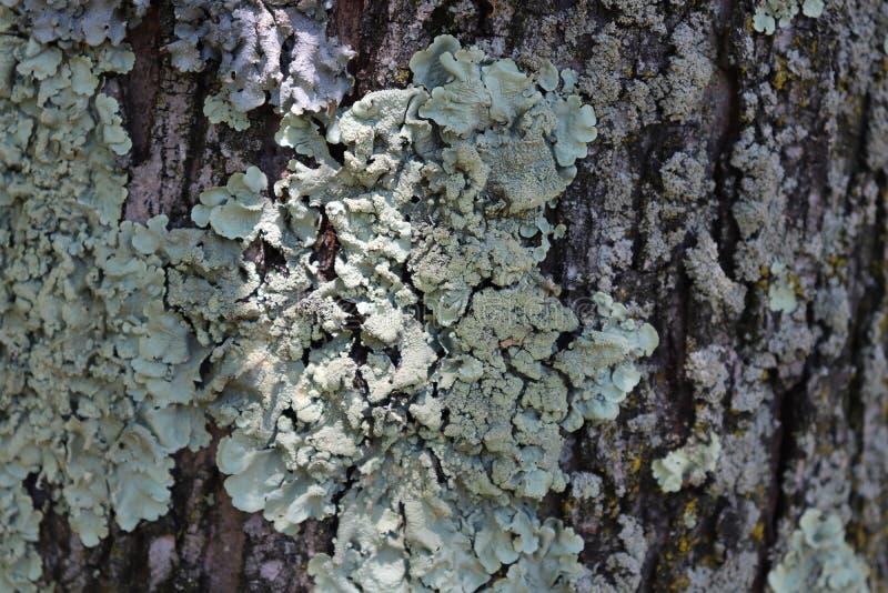 Corteza de árbol, verde, gris, afuera fotografía de archivo libre de regalías