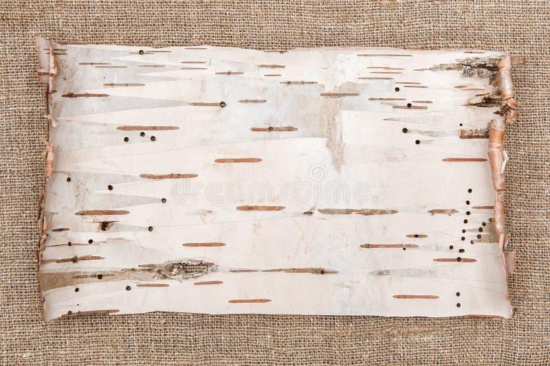 Corteza de abedul en fondo de la arpillera fotografía de archivo libre de regalías