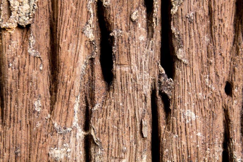 Corteza de Brown de un ?rbol fotos de archivo libres de regalías