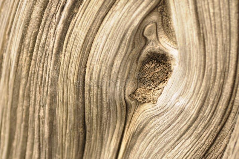 Corteza de Cypress fotos de archivo libres de regalías