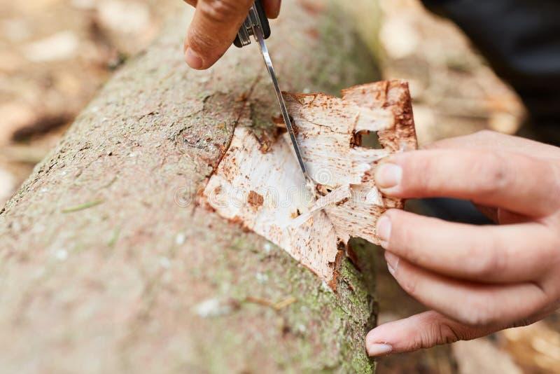 Corteza de los cortes del silvicultor del árbol a la prueba imagen de archivo