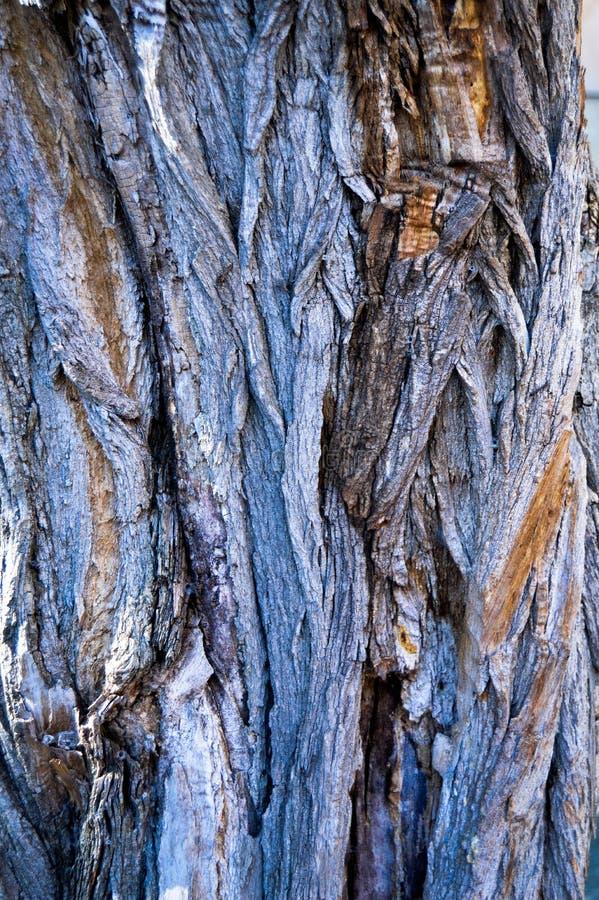 Corteza de madera abstracta de la textura, un ?rbol del acacia foto de archivo libre de regalías