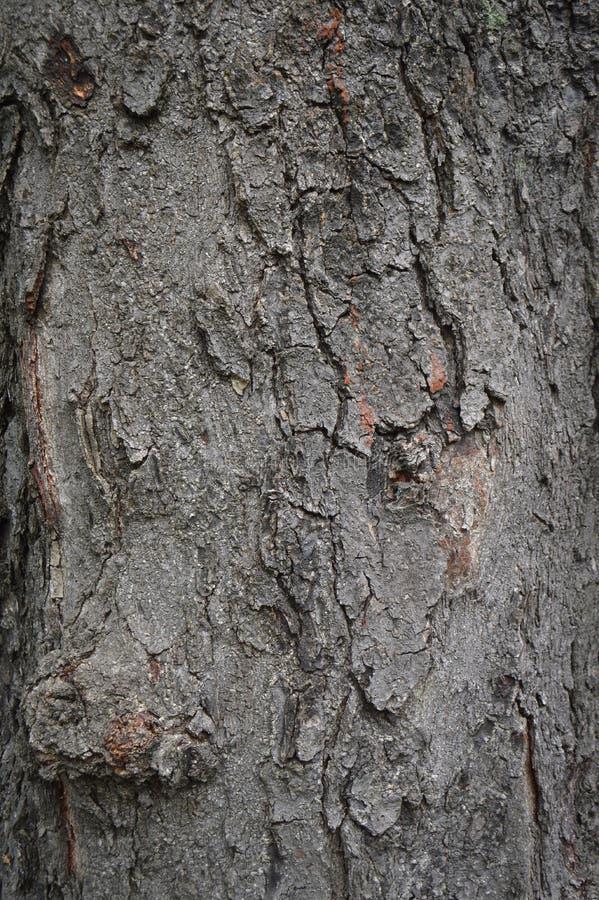 Corteza de madera abstracta de la textura, un roble Bosque, le?a, grunge fotografía de archivo libre de regalías