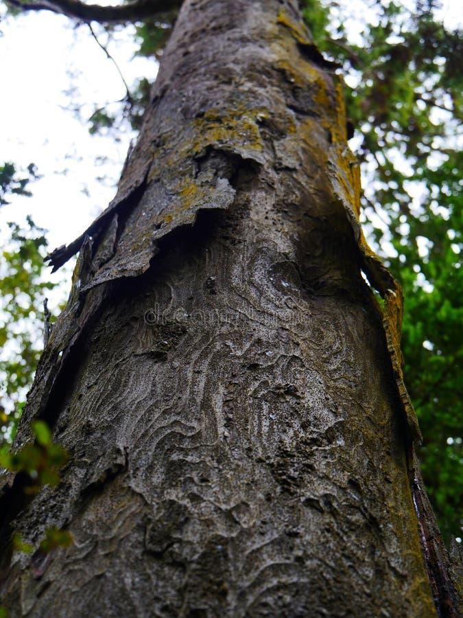 Corteza de madera tallada imagen de archivo