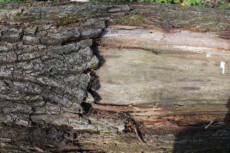 Corteza de un árbol fotos de archivo libres de regalías