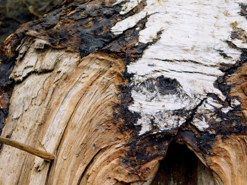 Corteza de un árbol con los cortes y las grietas fotografía de archivo libre de regalías