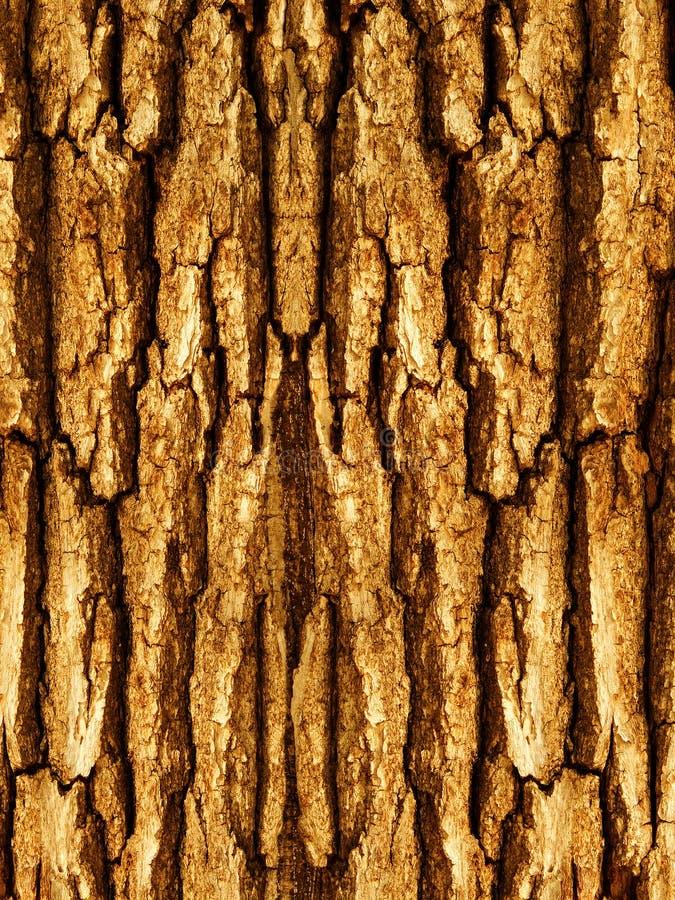 Corteza De Un árbol Un Roble Imagen de archivo libre de regalías