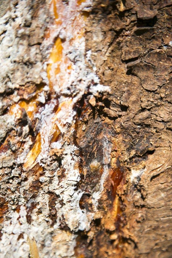 Corteza del árbol foto de archivo