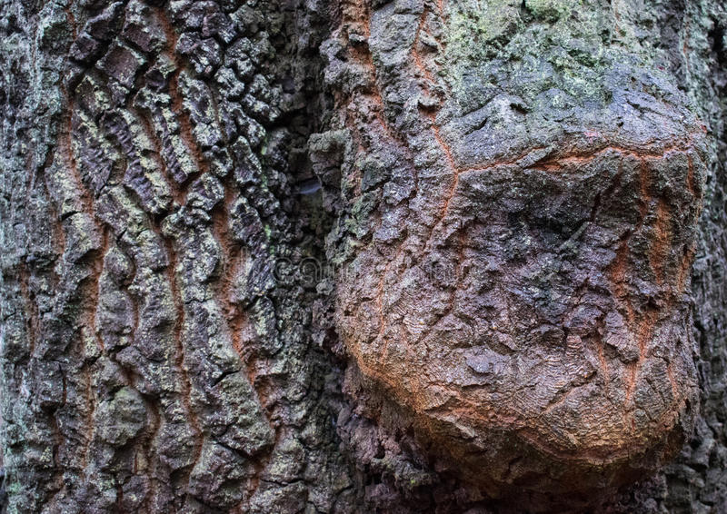 Corteza del árbol imágenes de archivo libres de regalías