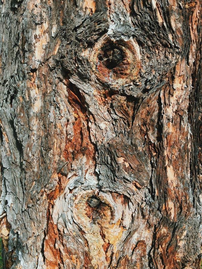 Corteza del árbol Fondo de la textura de la corteza imágenes de archivo libres de regalías