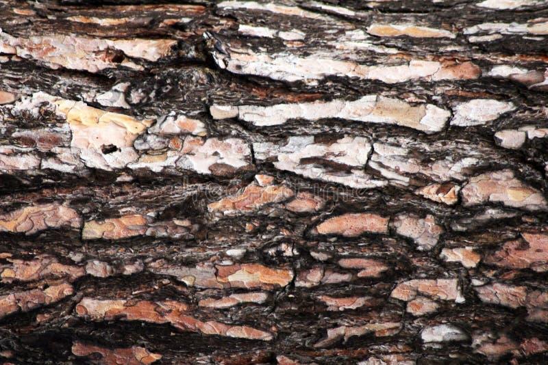 Corteza del árbol Textura inconsútil de Tileable imágenes de archivo libres de regalías