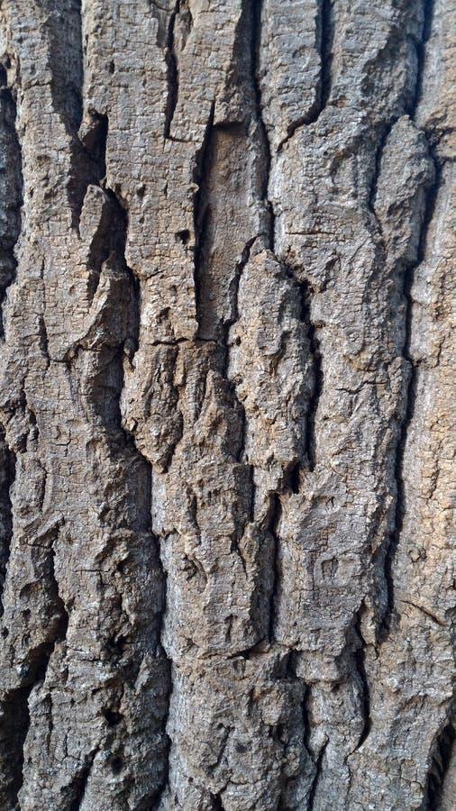 Corteza del árbol viejo foto de archivo