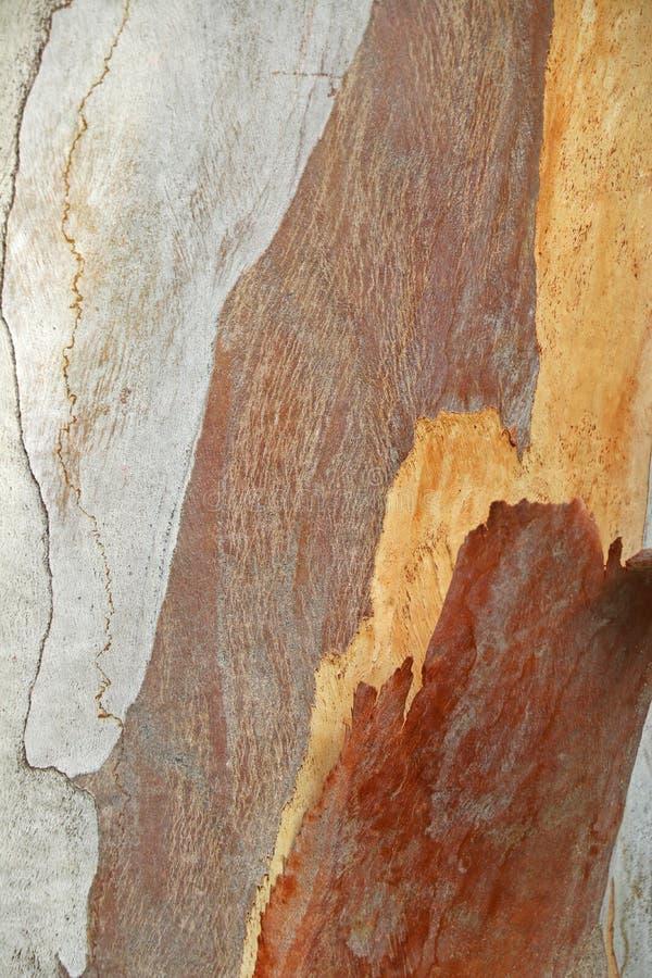 Corteza del eucalipto Textura, extracto imagenes de archivo