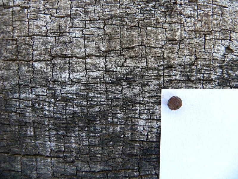 Corteza del fondo del árbol año blanco del golpe cuya foto de archivo libre de regalías