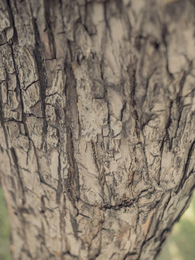 Corteza del olmo Textura inconsútil de Tileable imágenes de archivo libres de regalías