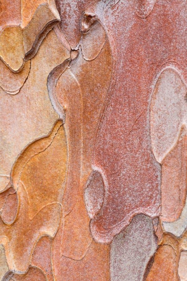Corteza del pino fotos de archivo