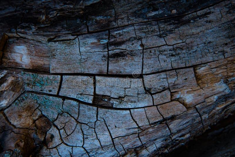 Corteza gris del árbol fotografía de archivo libre de regalías