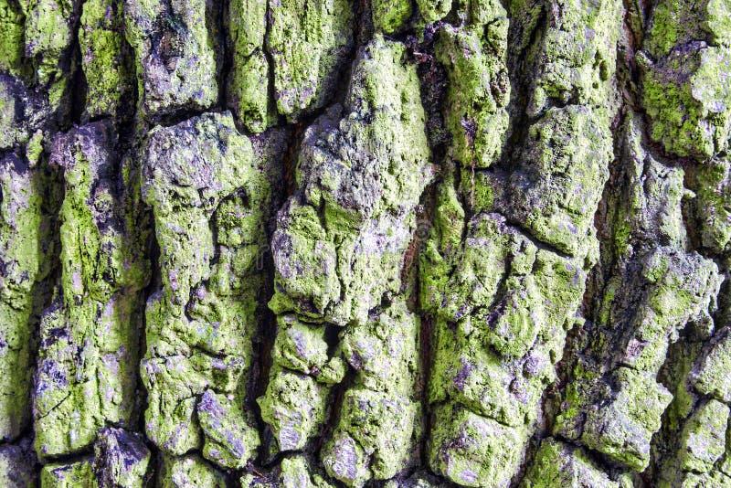 Corteza rugosa de un árbol imagen de archivo. Imagen de detalle ...