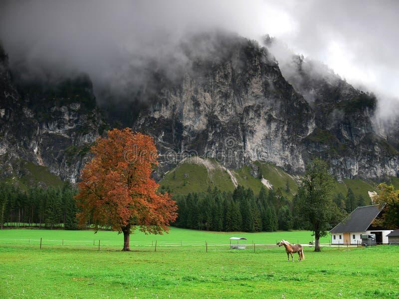 Cortijo con el caballo, totalizadores Gebirge, Austria fotografía de archivo