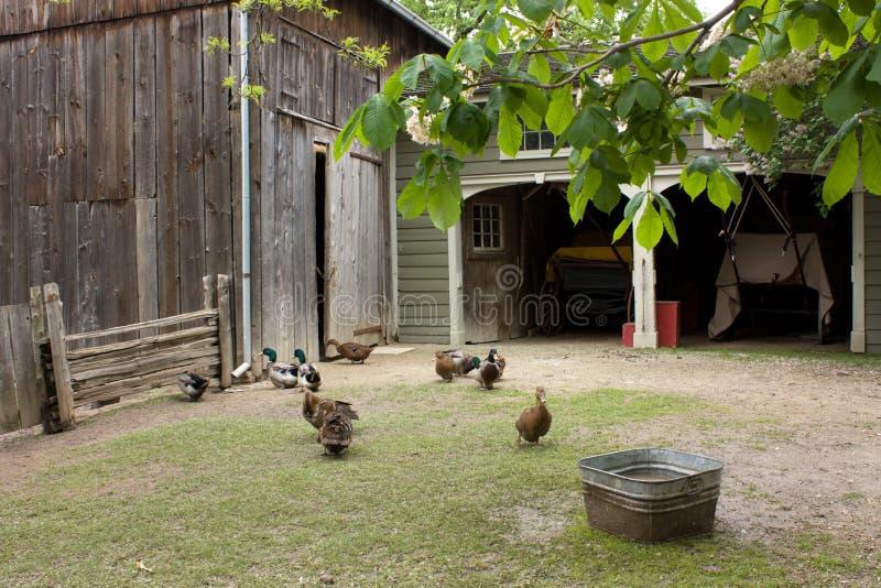 Cortile dell'azienda agricola con gallinacei fotografia stock libera da diritti