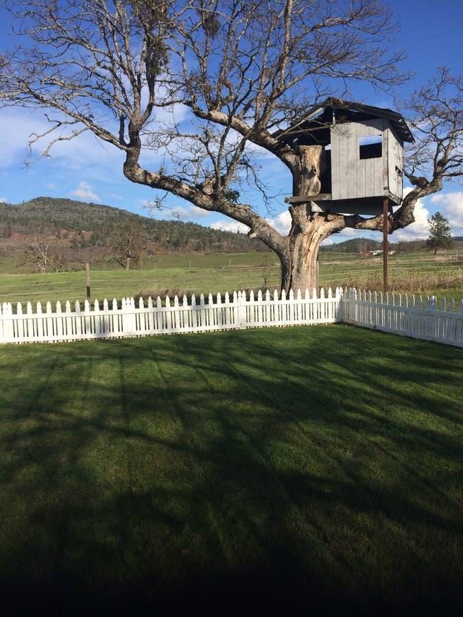Cortile e capanna sugli'alberi perfetti dell'immagine per i bambini fotografia stock libera da diritti