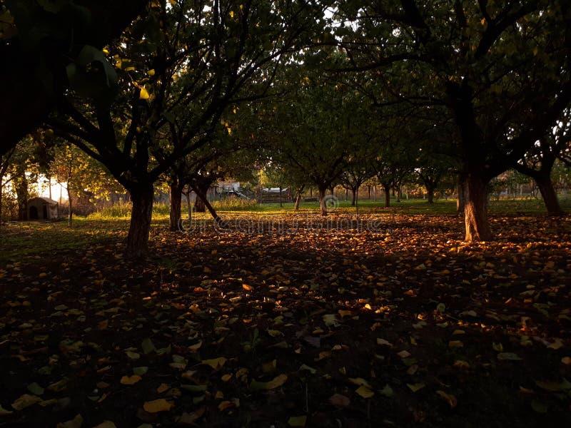 Cortile in pieno delle foglie fotografia stock