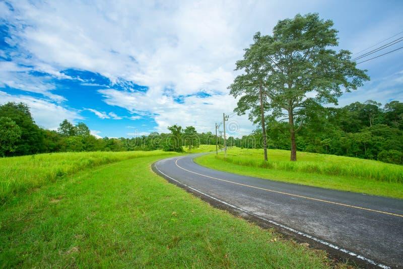 Cortile posteriore anteriore o della strada, del campo, terra, prato inglese fotografia stock