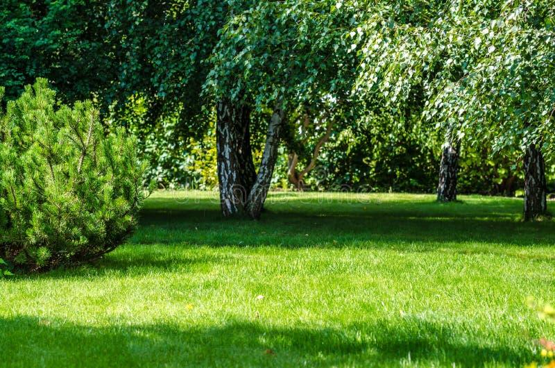 Cortile posteriore del giardino verde del prato inglese fotografie stock libere da diritti