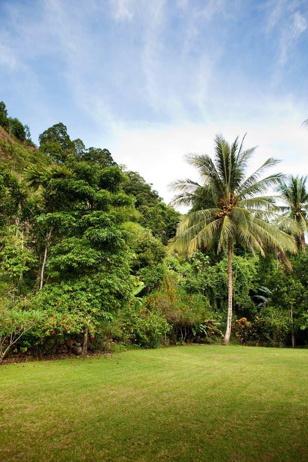 Cortile posteriore tropicale fotografie stock