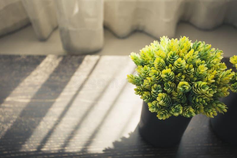 Cortina de ventana interior casera de la sombra de la luz de la mañana de la planta verde imágenes de archivo libres de regalías