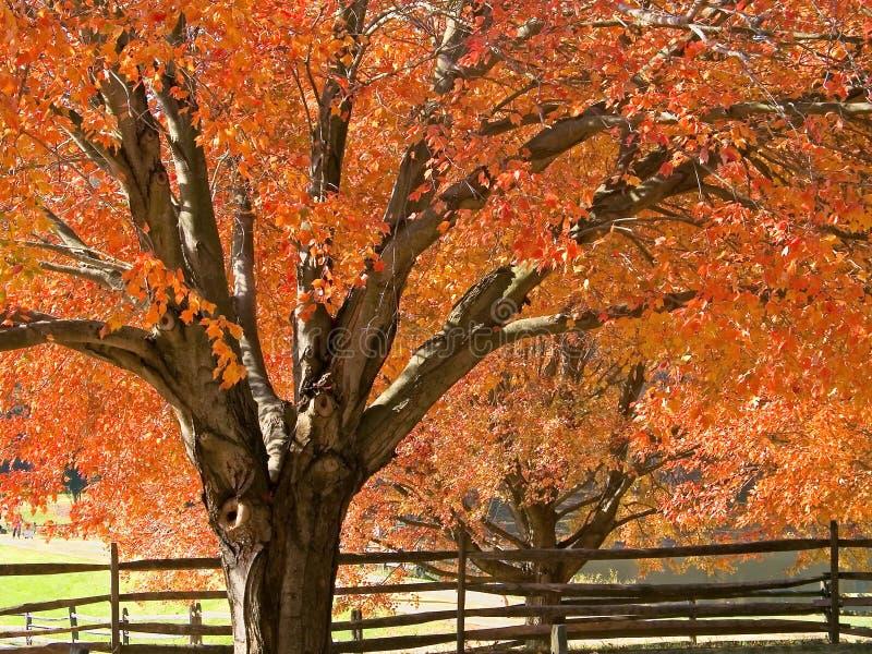 Cortina del otoño foto de archivo