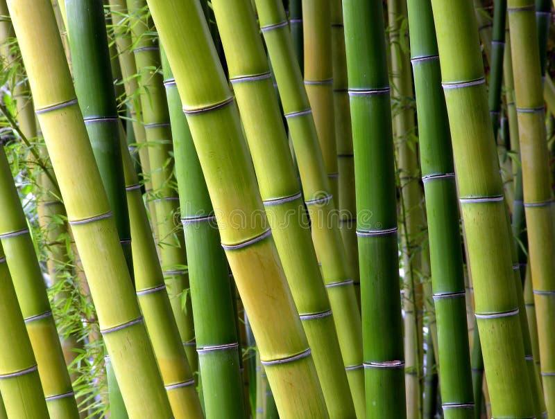Cortinas de bambú fotografía de archivo libre de regalías
