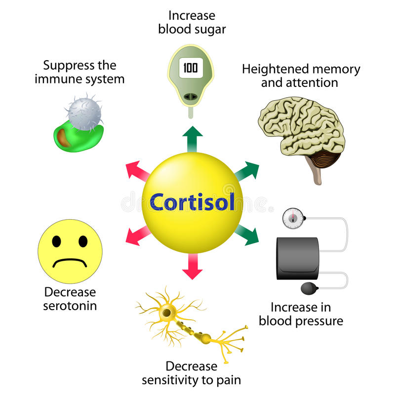 Cortisol Functions stock illustration