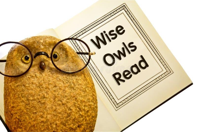Coruja com o livro/corujas sábias lidos imagens de stock