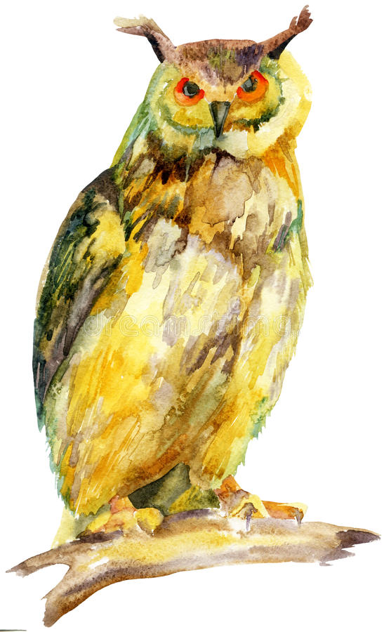 Coruja da aquarela em um ramo ilustração royalty free
