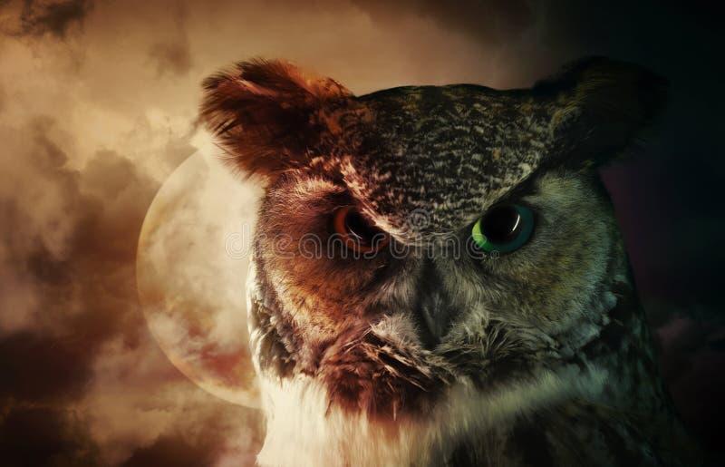 Coruja de noite assustador na caça imagem de stock