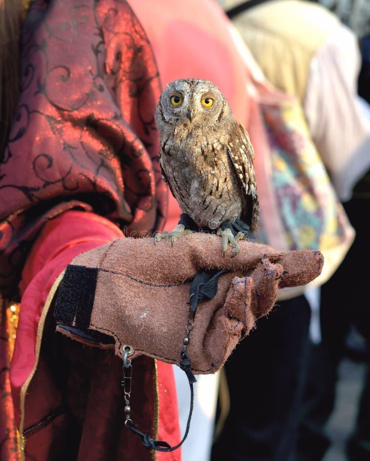 A coruja diminuta fotos de stock royalty free