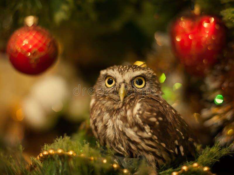 A coruja pequena que senta-se em uma árvore de Natal perto do Natal brinca imagens de stock royalty free