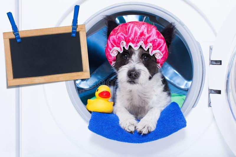 Corvées des travaux domestiques de chien photos stock