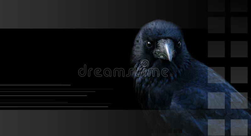 Corvo, corvo