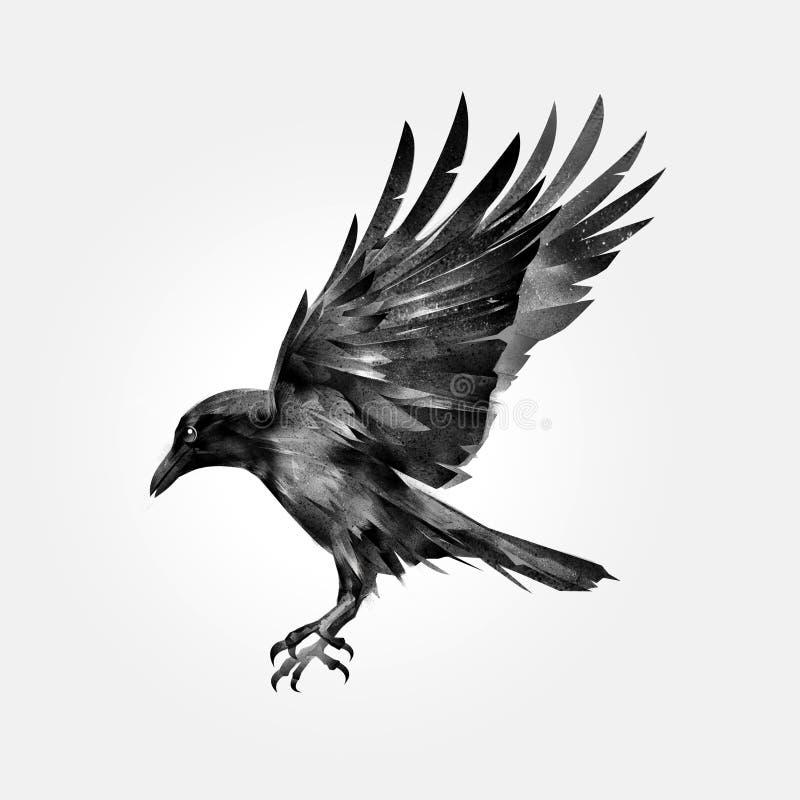 Corvo isolado de ataque tirado do pássaro ilustração royalty free
