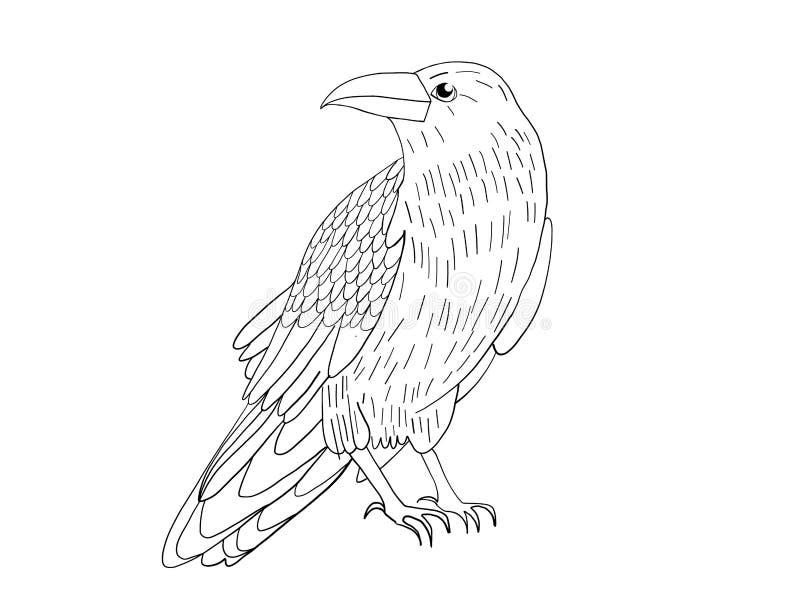 Corvo nero disegnato a mano Raven, schizzo dell'uccello, illustrazione di vettore royalty illustrazione gratis