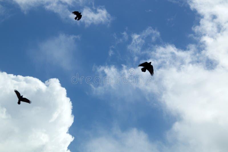 Corvo nero tre che circonda il cielo immagine stock libera da diritti