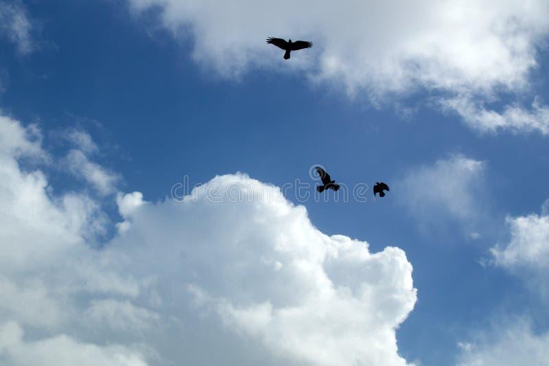 Corvo nero tre che circonda il cielo contro le nuvole fotografie stock libere da diritti